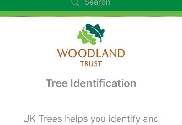 Review: Woodland Trust British Tree Identification App