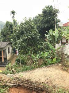 Kerala Forest Garden Home Garden Fantasy Garden Cultivated Gardener