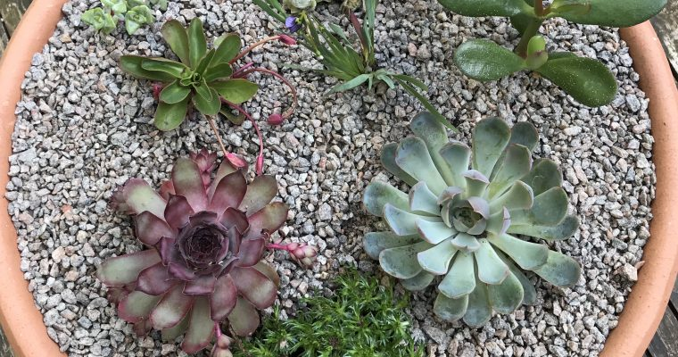 Containers – Making an alpine trough